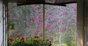 plantes pour décoration salle de bain tropicale