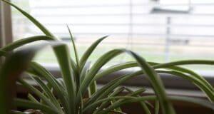 plantes dépolluantes pour humidifier une pièce