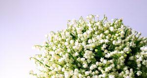 un bouquet de muguets