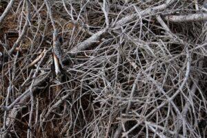 branches coupees avec un coupe branches