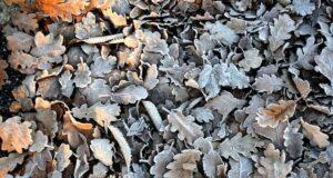 des feuilles à broyer